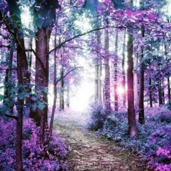 Diamanttavla Purple Forest 50x60