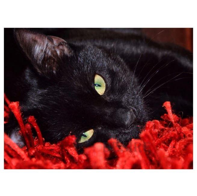 Diamanttavla Black Cat 50x70