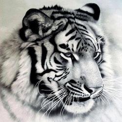 Diamanttavla Beautiful White Tiger 50x50 - Leveranstid 1-3 Dagar