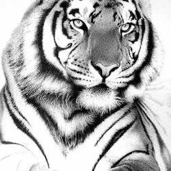 Diamanttavla Tiger B&W 40x50 - Leveranstid 1-2 Dagar