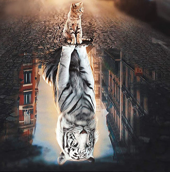Diamanttavla Cat And Tiger Mirror 50x50