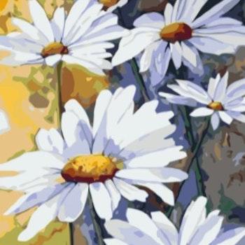 Paint By Numbers Daisy 50x70- Leveranstid 1-3 Dagar