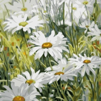 Paint By Numbers Daisy Flowers 50x70- Leveranstid 1-3 Dagar