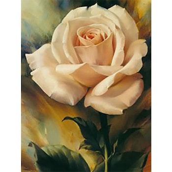 Diamanttavla (R) Rose Creame 40x50 - Leveranstid 1-3 Dagar