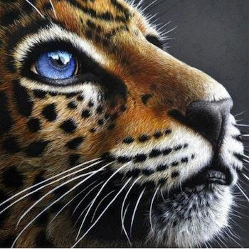 Diamanttavla Leopard With Blue Eyes 40x40 - Leveranstid 1-3 Dagar