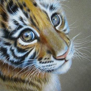 Diamanttavla Little Tiger 40x40 - Leveranstid 1-3 Dagar