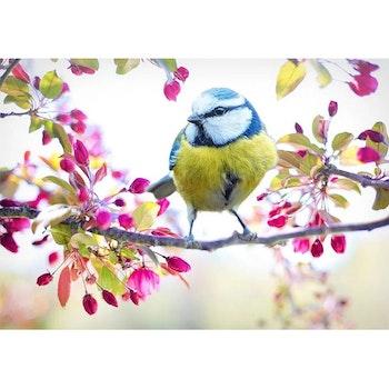 Diamanttavla Bird Flower Tree 40x50 - Leveranstid 1-3 Dagar