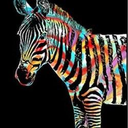 Scratch Painting Zebra 41x28,7 cm - Leveranstid 1-3 Dagar