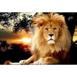 Diamanttavla Lion In Sunset 60x80 - Leveranstid 1-3 Dagar