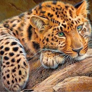 Diamanttavla Leopard 40x50