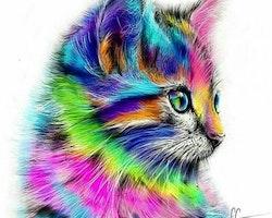 SNART I BUTIK - Diamanttavla (R) Colorful Cat 30x30