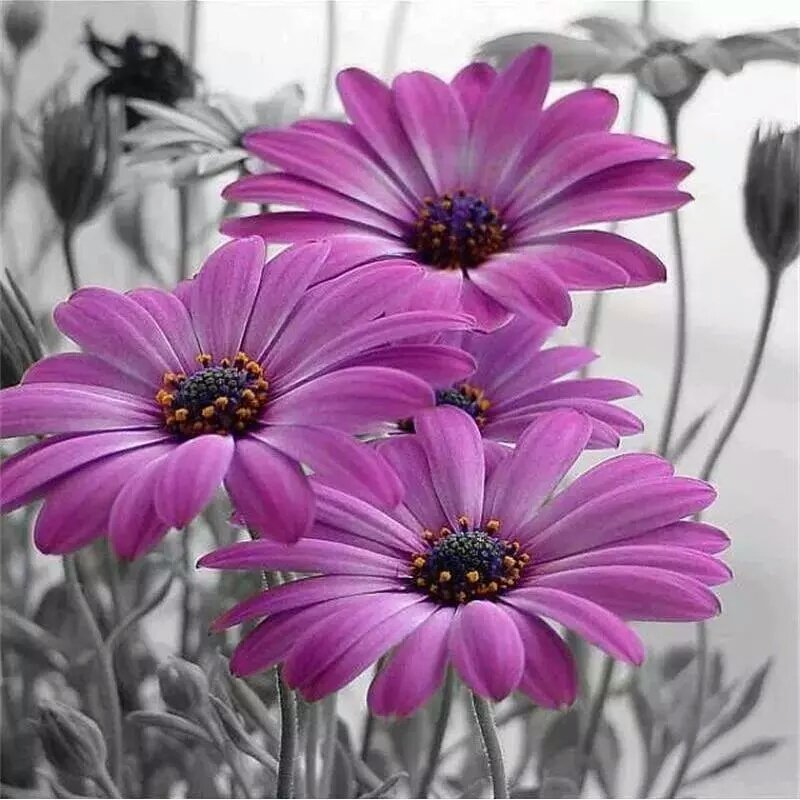 Diamanttavla Purple Flower 50x50