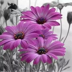 SNART I BUTIK - Diamanttavla Purple Flower 50x50