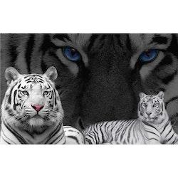 Diamanttavla Tiger Black And White 50x70