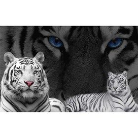 Diamanttavla Tiger Black And White 50x70