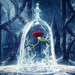 Diamanttavla Beauty And Beast Rose 40x40