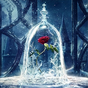 Diamanttavla Beauty And Beast Rose 40x40
