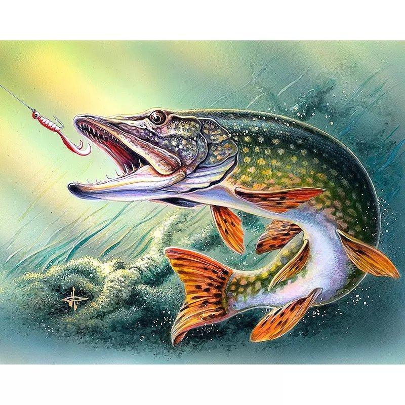 Diamanttavla (R) Hooked Fish 40x50