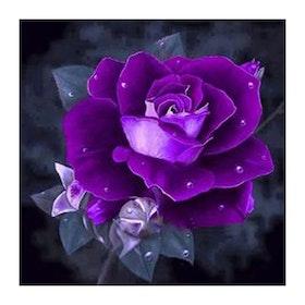 Diamanttavla Purple Rose 30x30