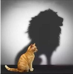 Diamanttavla Cat And Lionshadow 50x50