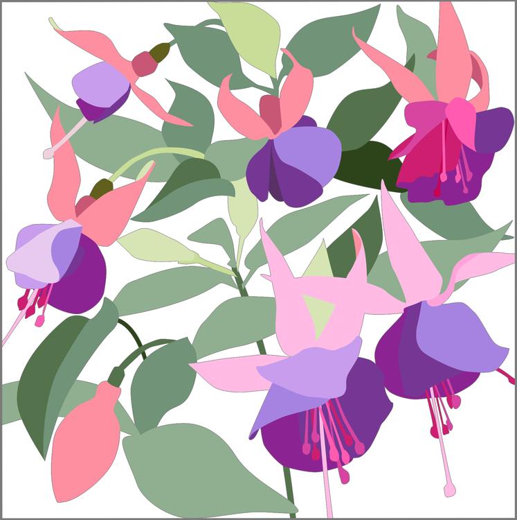 Kort Fuchsia 10 st