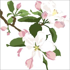Kort Äppelblom 10 st