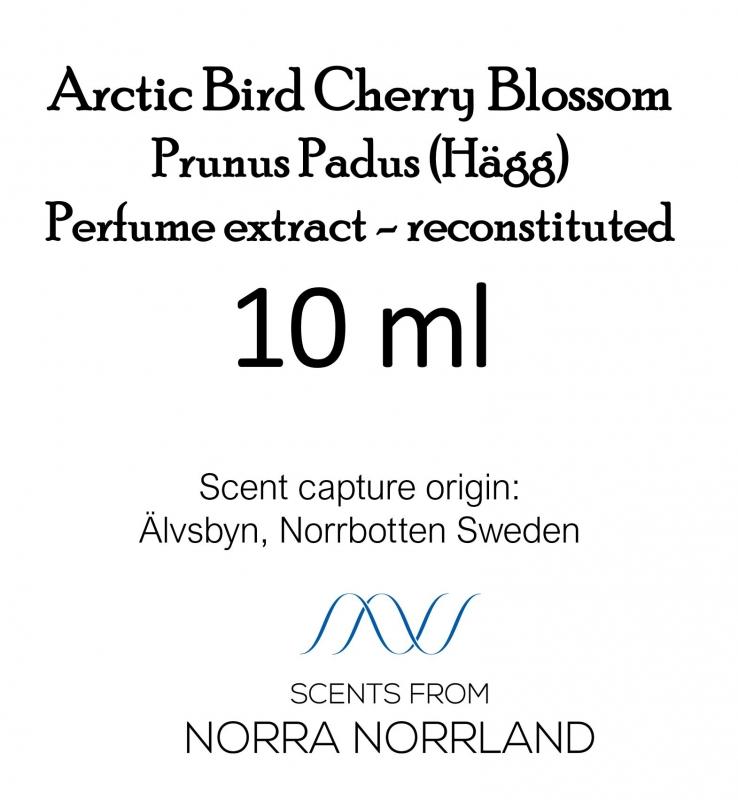 Arctic Bird Cherry Blossom - Prunus Padus (Hägg). New product 2020. In webshop in Feb -20