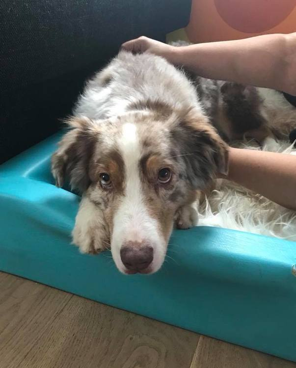 Hundmassage