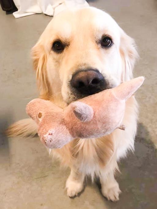 Vardagskurs för unga & vuxna hundar - Onsdagen 2/12 kl. 18.30