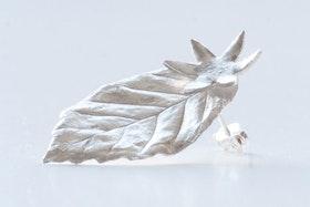 Silverlöv med blomma, örstickare