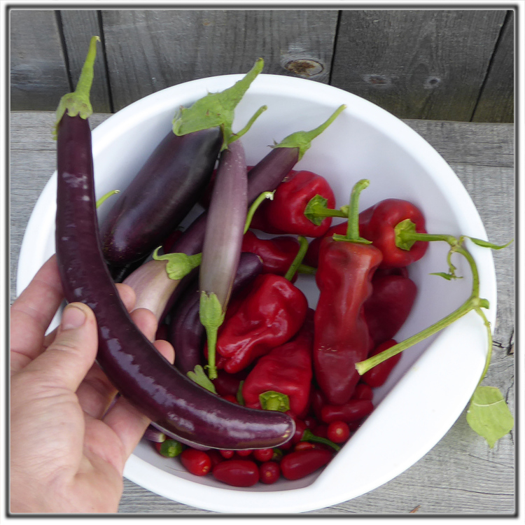 Fröer till Tapas-chili