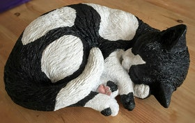 Sovande Katt vit och svart