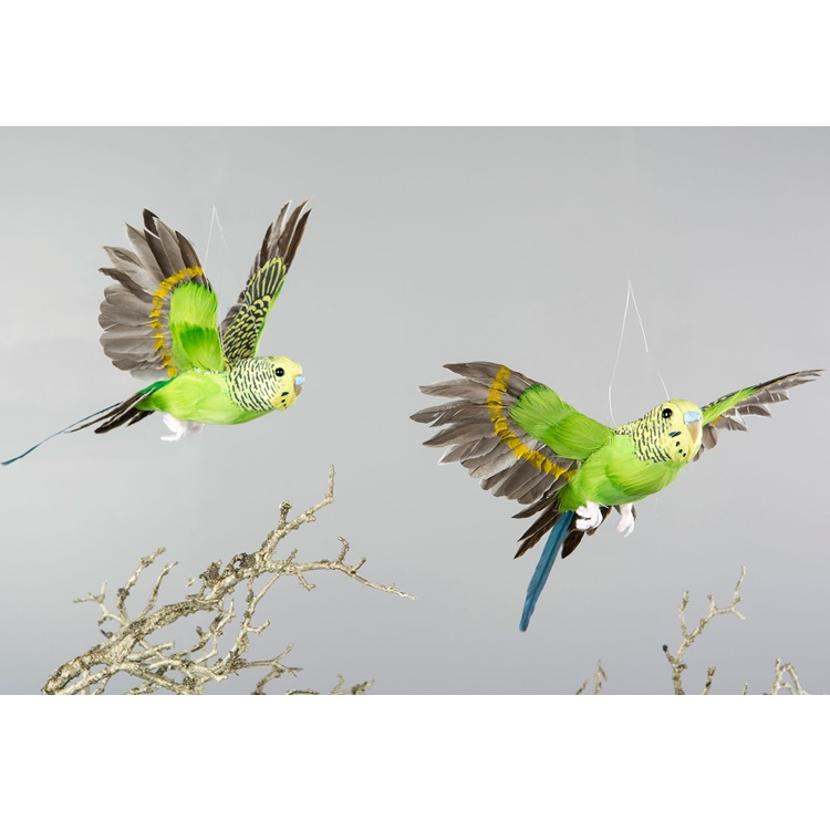 Undulat/Fågel  Flygande Grön