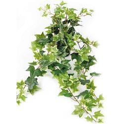 Ampelväxt Murgröna, 60 cm brokbladig