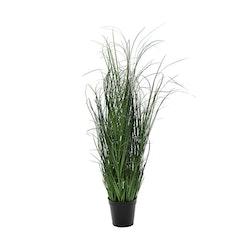 Högt Gräs