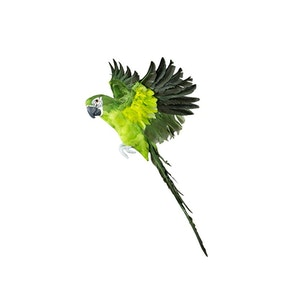 Papegoja Flygande Grön