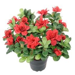 Konstgjord Azalea Röd
