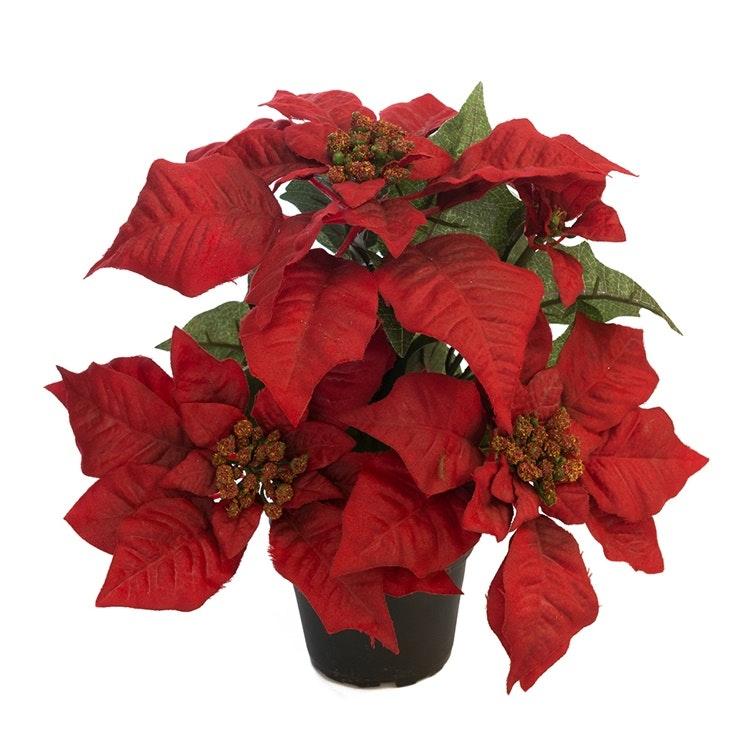 Julstjärna Röd 35cm