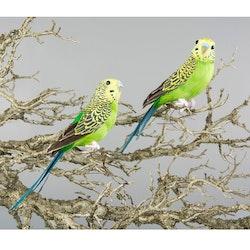 Undulat/Fågel  Sittande Grön