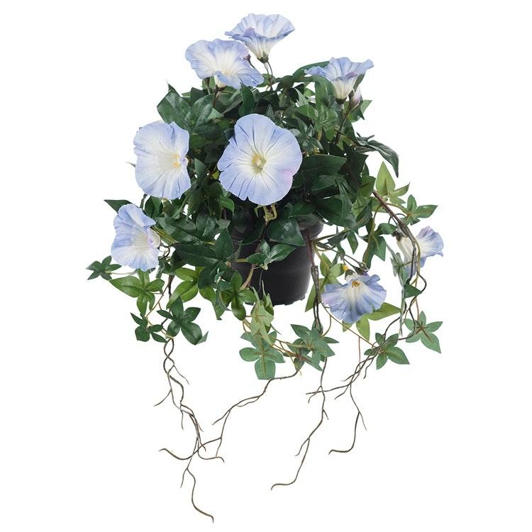 Blå verklighetstrogen blomman för dagen.