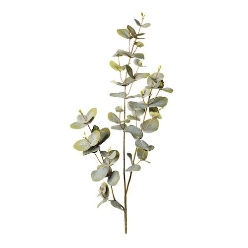 Eucalyptus 70cm