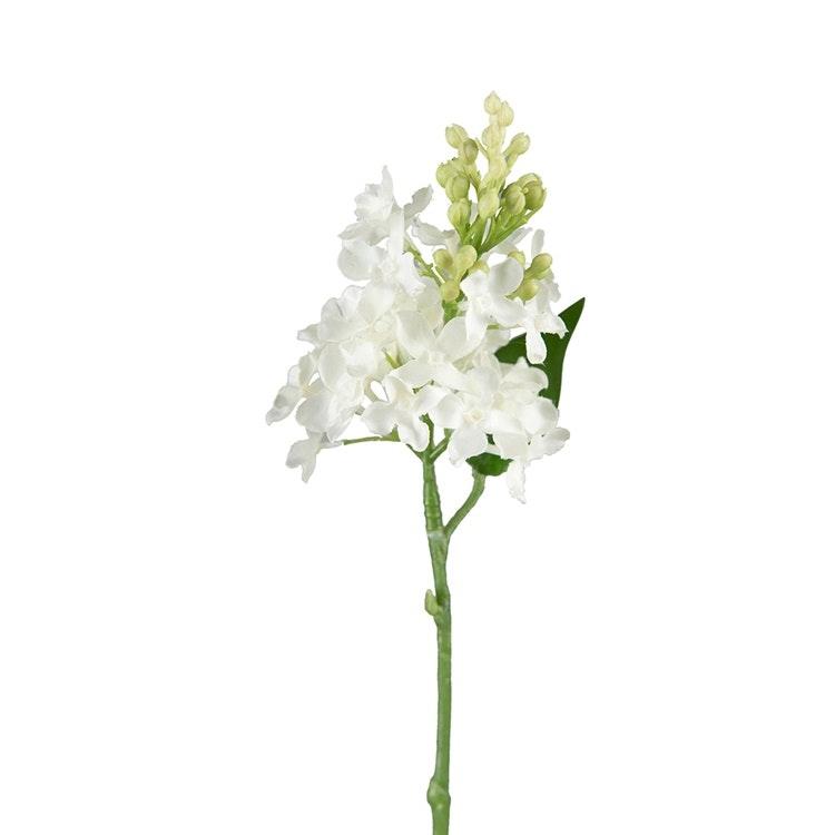 En verklighetstrogen kvist syrèn i vitt.
