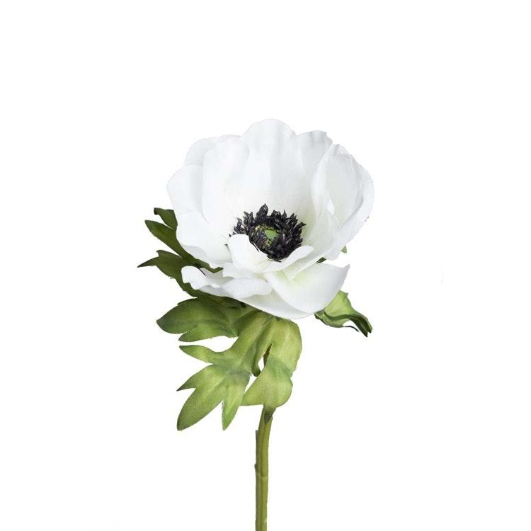 En verklighetstrogen kvist av vit Anemon
