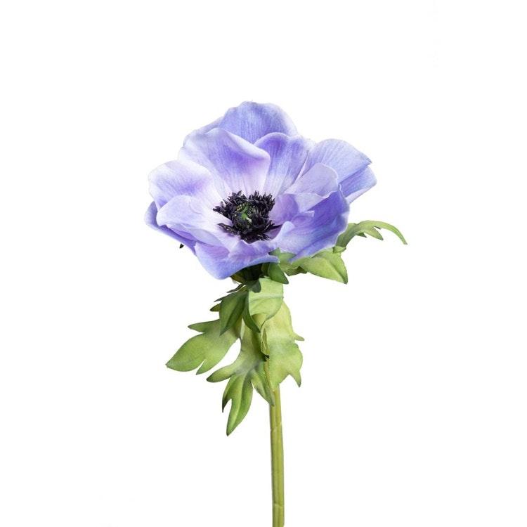 En verklighetstrogen kvist av blå Anemon