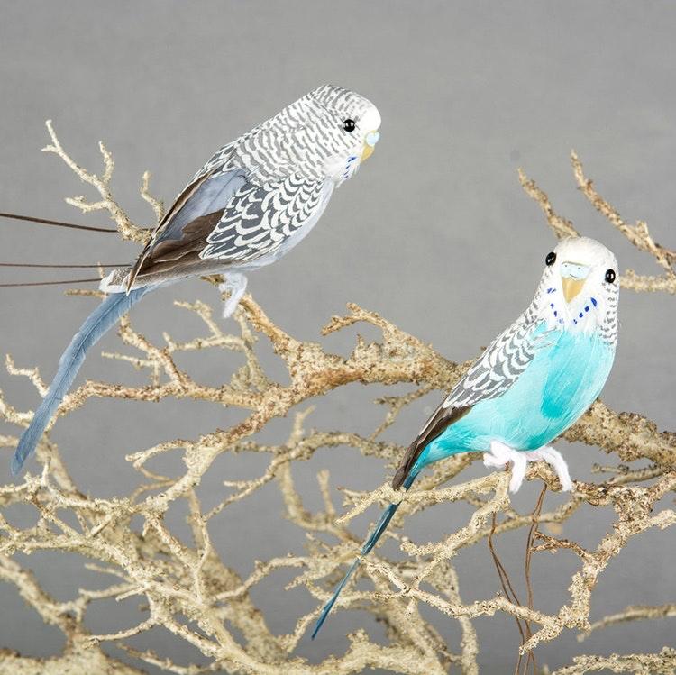 Undulat/Fågel  Sittande