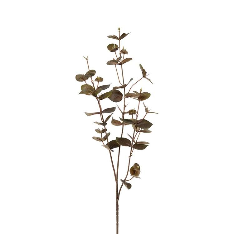 Eucalyptus mörkgrön, 70cm