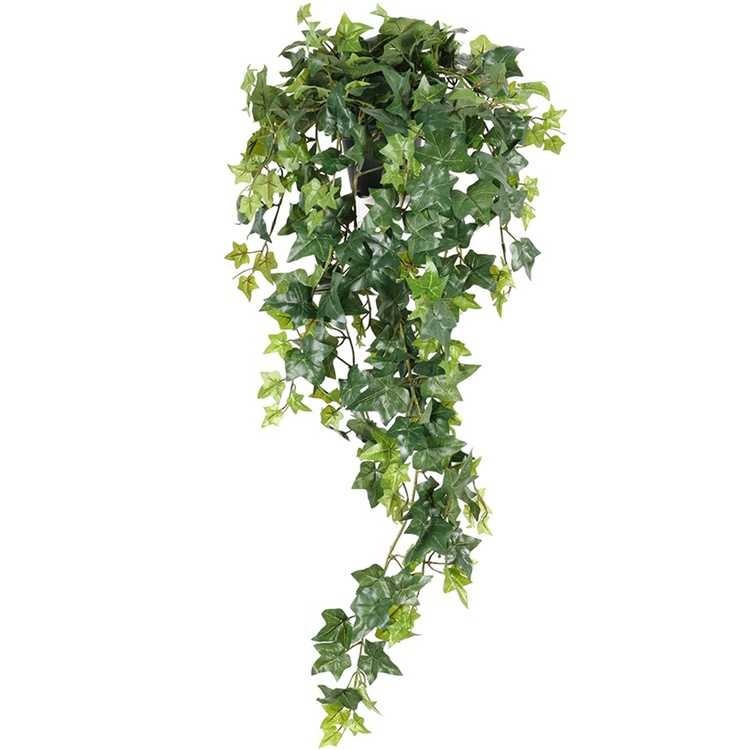 Ampelväxt Murgröna, 85cm
