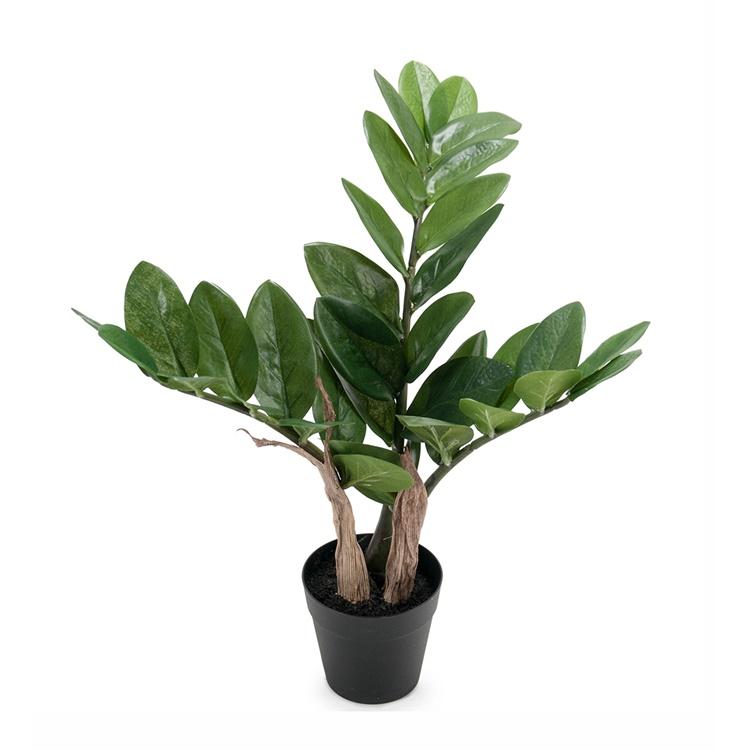 Zamifolia 45cm