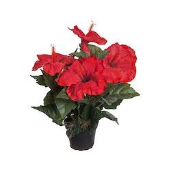Hibiscus 36 cm Röd