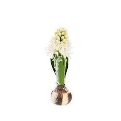 Konstgjord Hyacint med snö